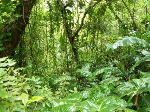 in-the-jungle-the-mighty-jungle-oahu-united-states+1152_12856892296-tpfil02aw-3551